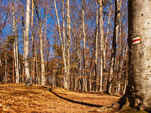 Weg durch den Wald im Fall Lizenzfreie Stockbilder