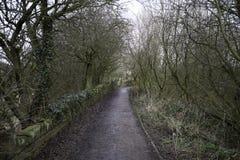 Weg durch die Bäume Stockbilder