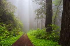 Weg durch die Bäume stockbild