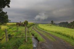 Weg durch die Reisfeldterrasse in Bali-Insel, Indonesien Lizenzfreies Stockbild