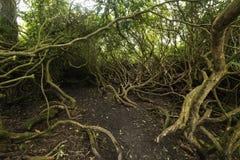 Weg durch die Verwicklungsbäume stockfotografie