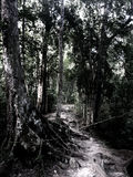 Weg durch Dschungel Stockfotos