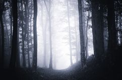Weg durch dunklen schwermütigen Wald mit Nebel lizenzfreie stockfotografie