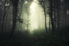 Weg durch dunkles gespenstisches Holz stockfotos