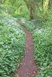 Weg durch ein Holz im Frühjahr lizenzfreie stockfotos