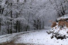 Weg durch einen schönen Winterwald Lizenzfreie Stockbilder