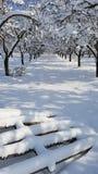 Weg durch einen Schnee bedeckte Obstgarten Stockfotografie