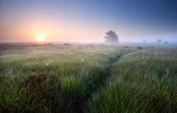 Weg durch Gras im nebelhaften Sonnenaufgang Stockbilder