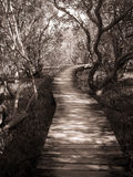 Weg durch Mangrove Stockfotografie