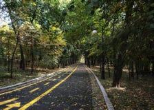 Weg durch Park stockbild