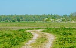 Weg durch Sumpfgebiet im Frühjahr lizenzfreie stockbilder