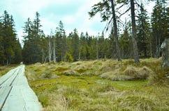 Weg durch Torfmoor Stockbilder