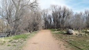 Weg durch tote Bäume mit grünem Gras stockfoto