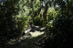 Weg durch tropischen Dschungelmorgenvorhintergrund lizenzfreies stockbild