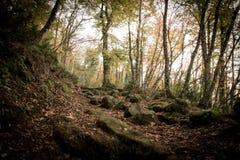 Weg durch verzauberten Autumn Forest Lizenzfreie Stockfotografie