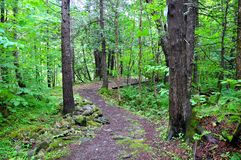 Weg durch Wald Stockfotografie