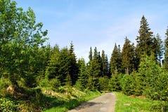 Weg durch Wald Lizenzfreie Stockfotos