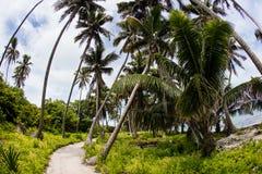 Weg durch Wald von Kokosnuss-Palmen Stockbilder
