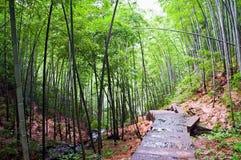Weg in een bamboebos Royalty-vrije Stock Afbeelding