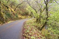 Weg in een bos Stock Foto