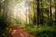Weg in een bos Stock Afbeeldingen