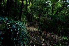 Weg in een bos Royalty-vrije Stock Afbeelding