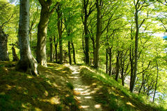 Weg in een bos Royalty-vrije Stock Fotografie
