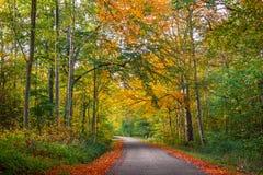 Weg in een bos bij de herfst Stock Foto