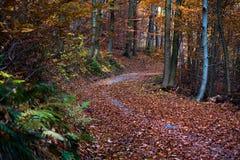 Weg in een bos tijdens daling Stock Afbeeldingen