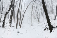 Weg in een bos van de Kerstmis sneeuwwinter Royalty-vrije Stock Afbeeldingen