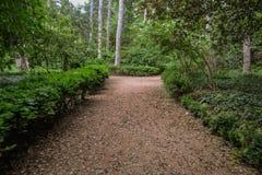 Weg in een botanische tuin Stock Afbeelding