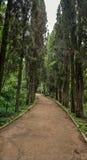 Weg in een botanische tuin Royalty-vrije Stock Fotografie