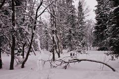 Weg in een de winterhout Royalty-vrije Stock Afbeeldingen