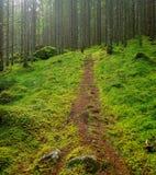 Weg in een groen bos Royalty-vrije Stock Afbeelding