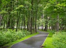 Weg in een Groen Park Stock Foto