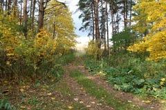 Weg in een mooi de herfstbos Stock Afbeeldingen