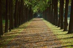 Weg in een park in de herfst Royalty-vrije Stock Foto