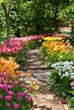 Weg in een tuin onder tulpen Stock Afbeeldingen