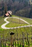 Weg in een vorm van een hart, Maribor Stock Foto
