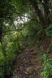 Weg in een weelderig en verdant bos Royalty-vrije Stock Foto's