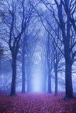 Weg in einem dunklen und nebeligen Wald in den Niederlanden Stockfotos