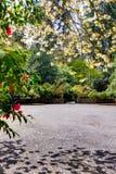 Weg in einem Garten, Kirschblüte stockbilder