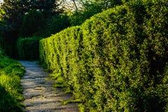 Weg in einem Park bei Sonnenuntergang Lizenzfreies Stockbild