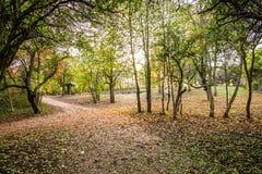 Weg in einem Park voll von Blättern Lizenzfreie Stockfotos
