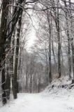 Weg in einem Snowy-Buchen-Wald Stockfotografie