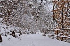 Weg in einem Winterwald stockfotos