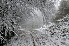 Weg in einen nebeligen Winterwald mit einigen bereiften Niederlassungen im Vordergrund Lizenzfreie Stockfotografie