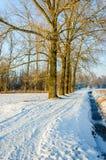 Weg in einer winterlichen ländlichen Landschaft Stockbild