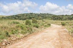 Weg en Araucaria angustifoliabos royalty-vrije stock fotografie