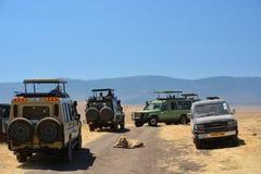 Weg en auto en leeuwsafari Tanzania Stock Foto